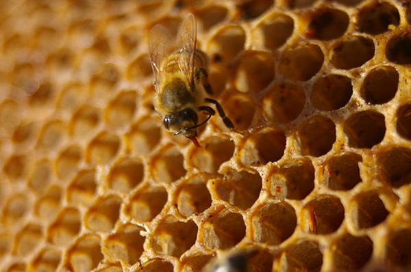 Gerucht: Honeycomb arriveert in februari als Android 2.4
