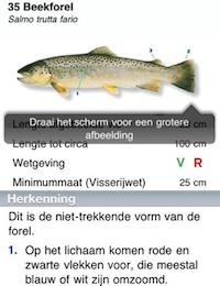 Vissengids binnenkort als Android-app: welke vis heb ik beet?