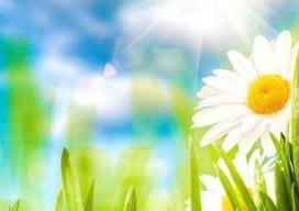 Vier de start van de lente met deze 4 gratis Android-apps