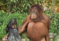 Nieuwe Android-reclame vol met schattige dieren