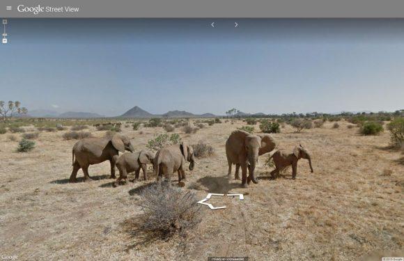 Google Street View safari toont Afrikaans wildleven
