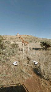google street view safari