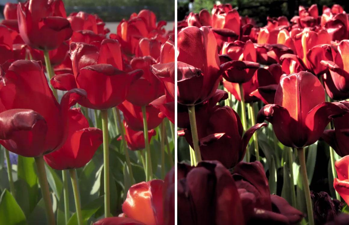 'Toekomstige Android-camera bewerkt foto's al voordat je ze neemt'