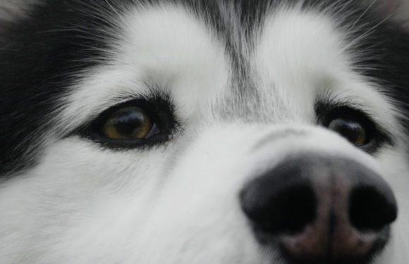 Onze Netflix-tips van november: Dogs, The Sinner en She-Ra