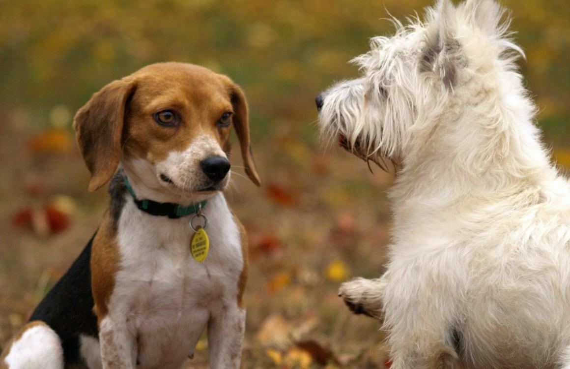 Column: Mijn puppy heeft een eigen dating-app