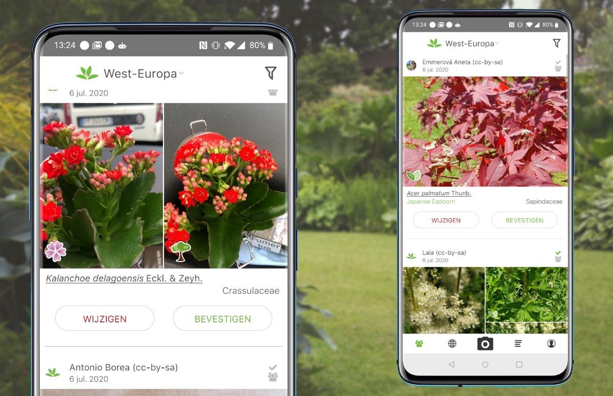 Planten-app Pl@ntnet