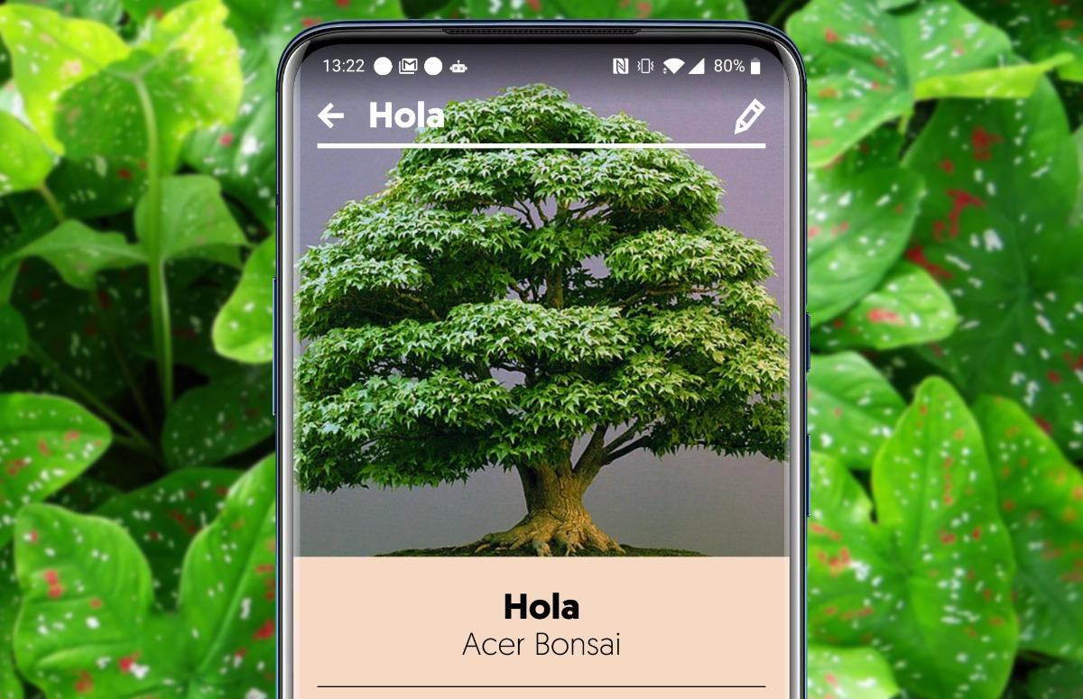 4 planten-apps voor mensen zonder groene vingers