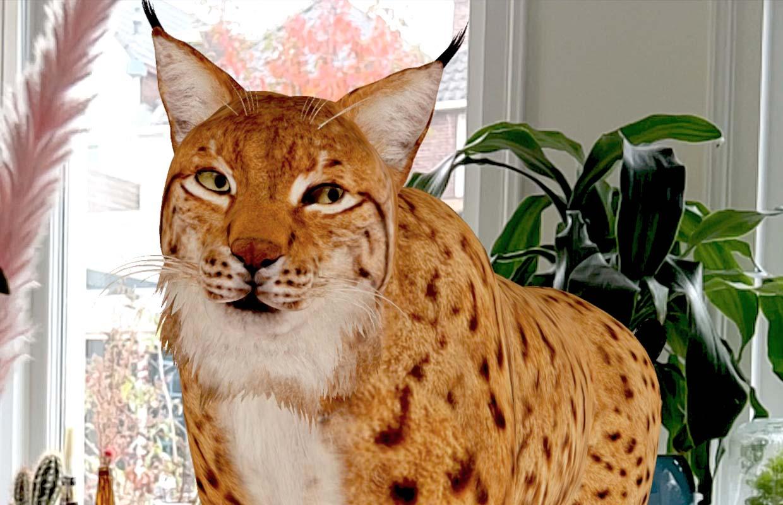 Bedreigde diersoorten in je woonkamer: dit zijn Googles nieuwe AR-dieren