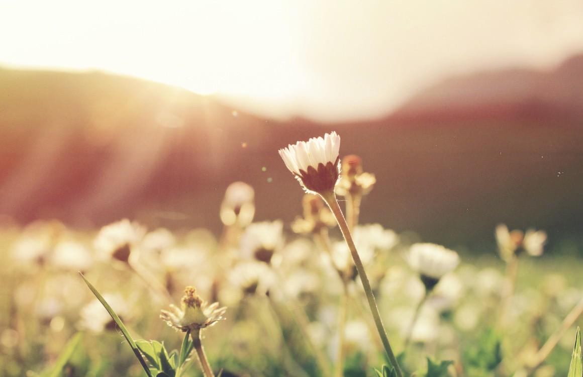 De 3 beste hooikoorts apps om het voorjaar door te komen